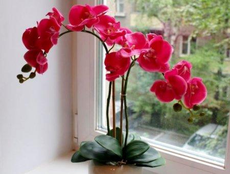 Орхидеи. Все секреты выращивания